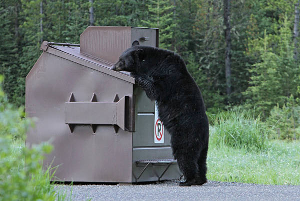 Reduce the threat of bear attack with Bear Scare wildlife safety training