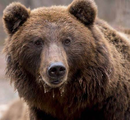 Bear Scare for Non-Lethal Bear Management and Bear Safety Training Courses