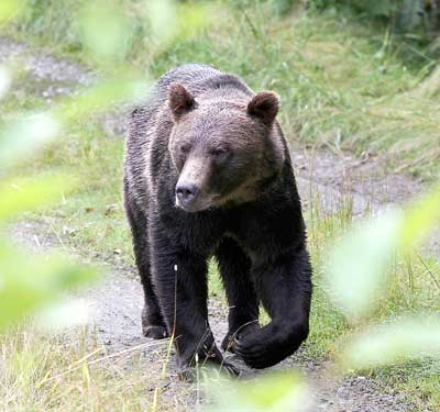 Wildlife specialists teaching bear safety courses, wildlife management, non-lethal bear management from Bear Scare